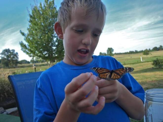 logan butterfly 3